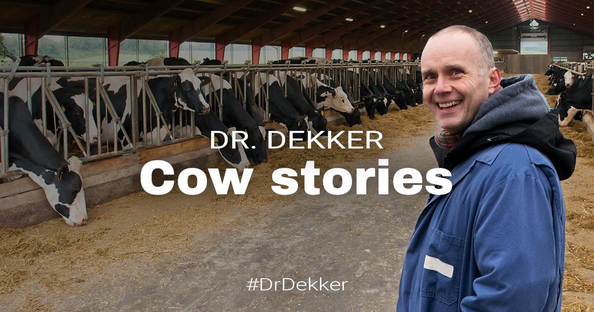 Dr Dekker