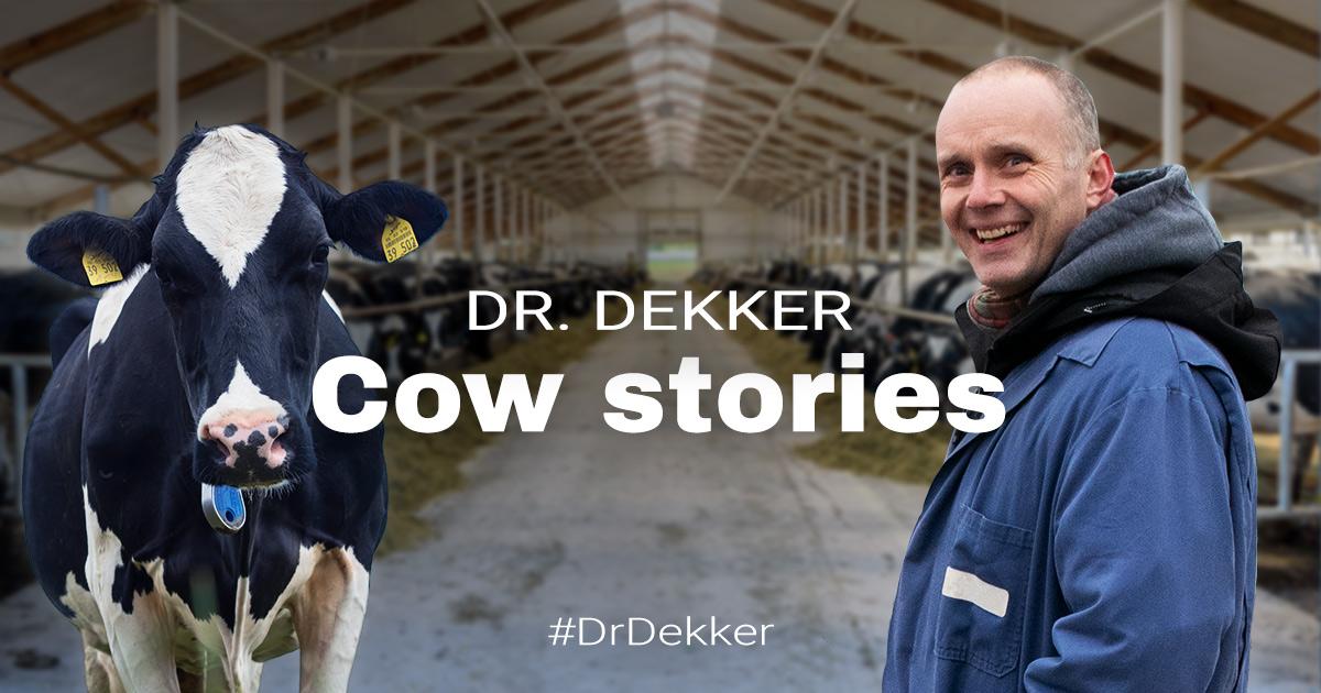Dr Dekker Cow stories