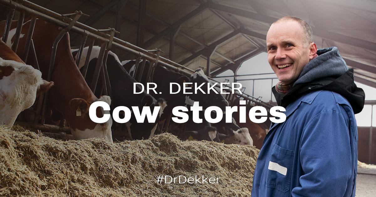 Dr. Dekker Cow stories